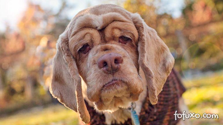 Dicas para ensinar cães mais velhos a hora e o local de fazer suas necessidades