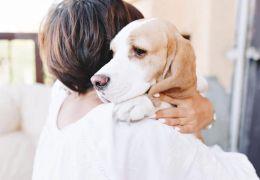 Cachorros com soluço: saiba como ajudar o seu amigo