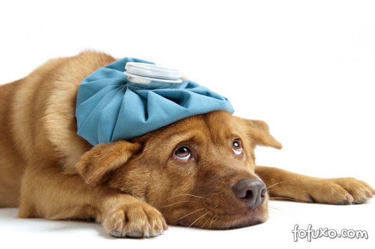 Saiba como identificar a gripe canina