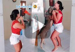 Cachorro dançarino faz sucesso em vídeos do TikTok