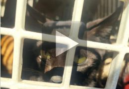 Mulher revolta internet ao obrigar gato a comer carne com pimenta
