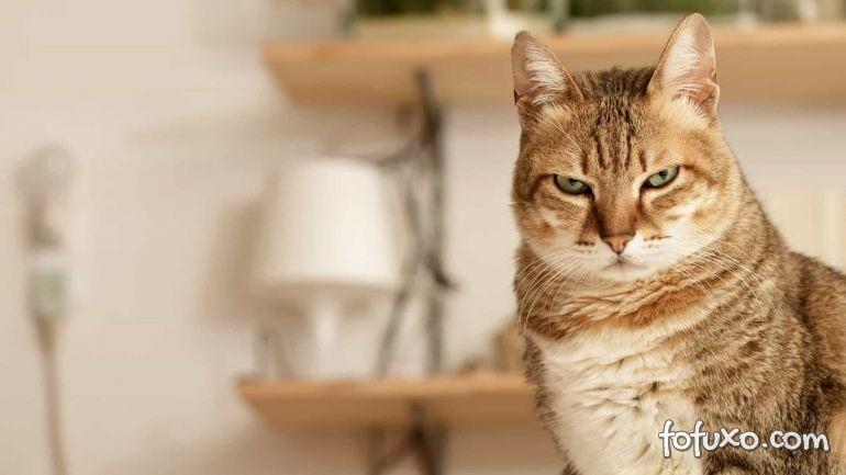 Gato que fica olhando fixo para os humanos
