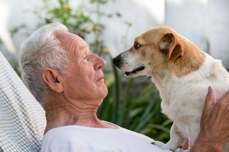 5 sinais que compram que seu cachorro confia em você