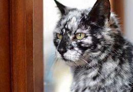 Vitiligo em cães e gatos: saiba detectar e cuidar