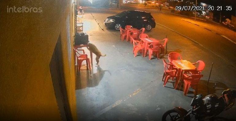 "Cachorro ""furta"" lanche e deixa motoboy sem jantar"