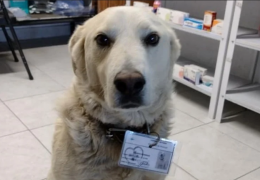 """Cachorro é """"contratado"""" como chefe de segurança de uma farmácia"""