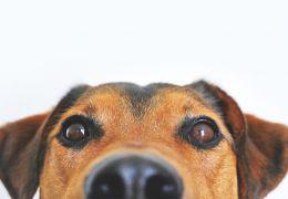 5 cheiros que os cachorros não gostam