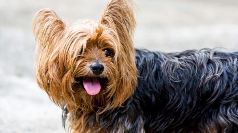 Confira algumas dicas para evitar que os pelos do cão fiquem embolados