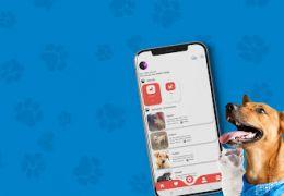 Aplicativo conecta animais abandonados com quem deseja adotar