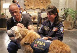 Museu homenageia cães que trabalharam no 11 de setembro