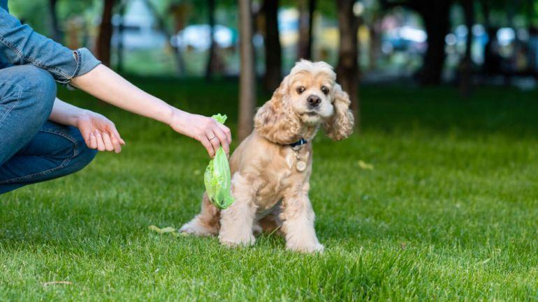 5 dicas para corrigir cão que come fezes