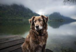 Cães idosos e cegos: confira algumas dicas de como cuidar dos pets