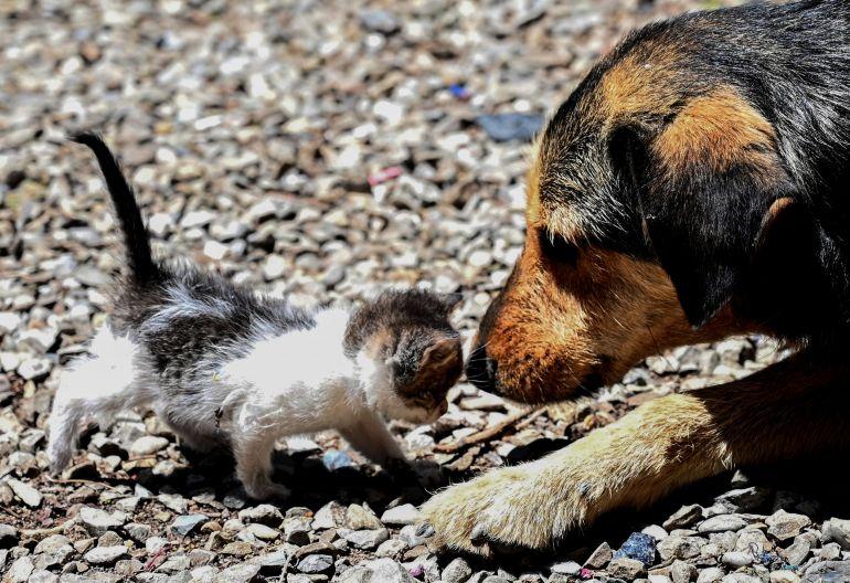 5 formas de ajudar cães e gatos de rua além da adoção