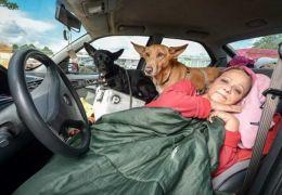 Professora decide morar dentro de carro para ficar com cachorros