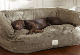 6 benefícios das camas de cachorros para pets e tutores