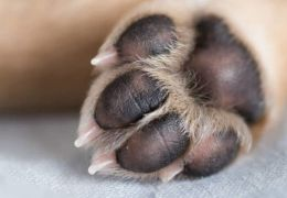 Unhas do cachorro: confira os principais cuidados