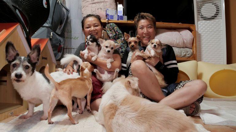 Presidente da Coreia do Sul sugere vetar consumo de carne de cachorro no país