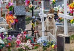 Cachorro passa a morar no cemitério depois da morte do dono
