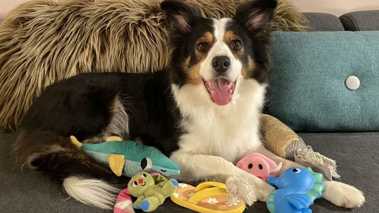 """Cachorros """"gênios"""" conseguem aprender nome de mais de cem brinquedos"""