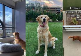 Cachorro faz amizade com limpador de vidros