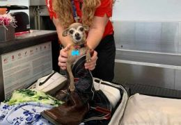 Casal encontra cachorro de estimação dentro de mala em aeroporto