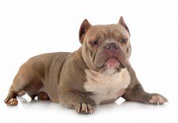 Latam suspende transporte de pets após outro cão morrer em voo