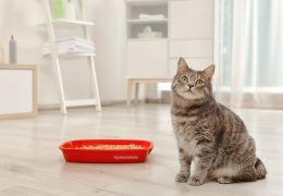 Confira dicas para limpar melhor a caixa de areia do gato