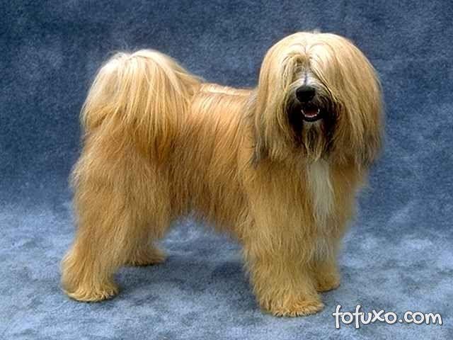 Origem do Terrier Tibetano