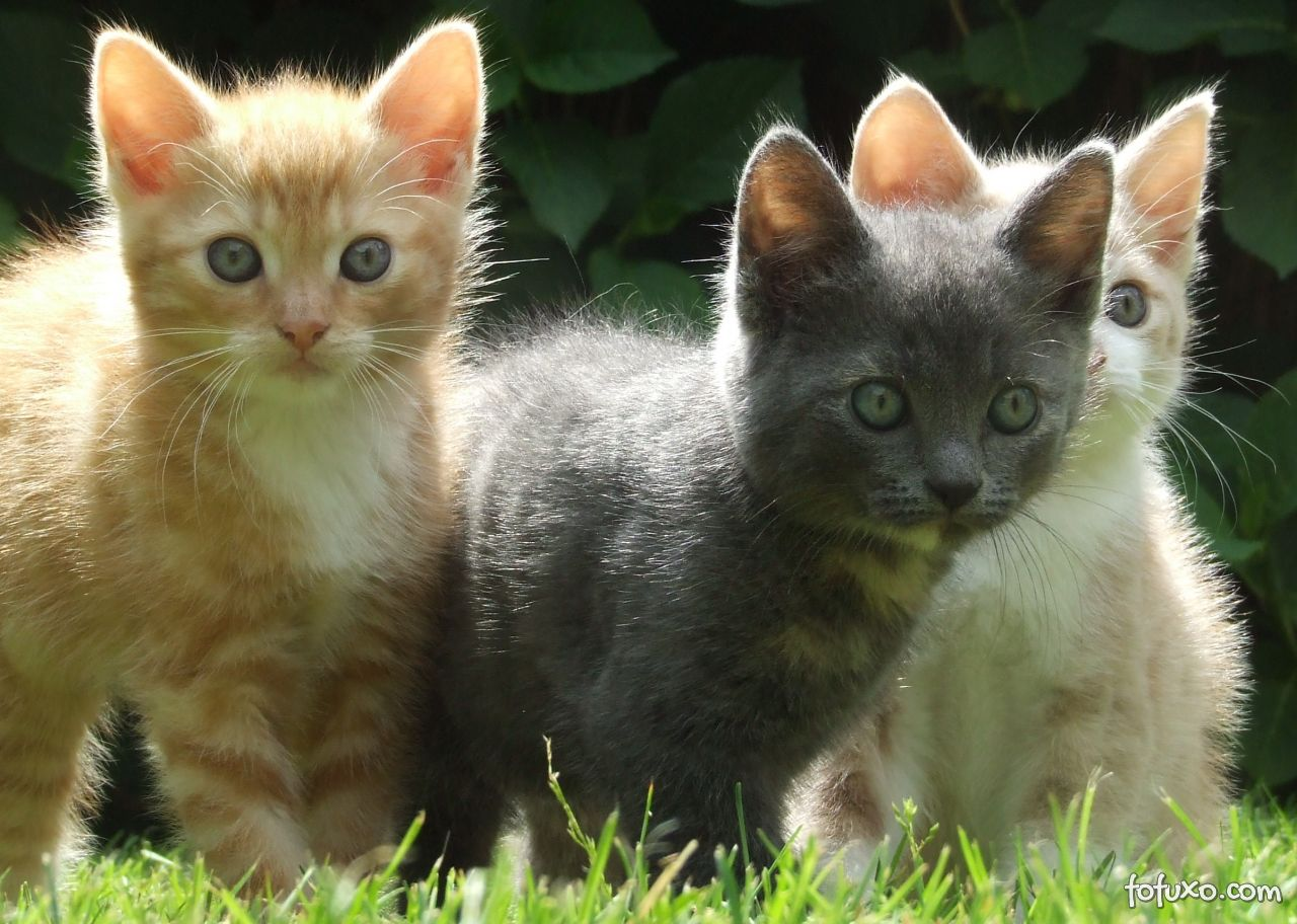 Dicas adestramento gatos