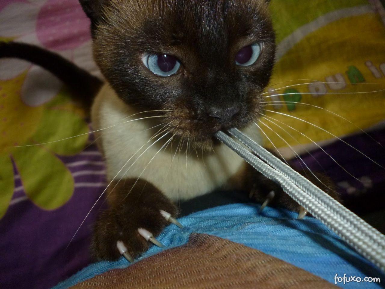 Como cuidar das unhas do seu gato