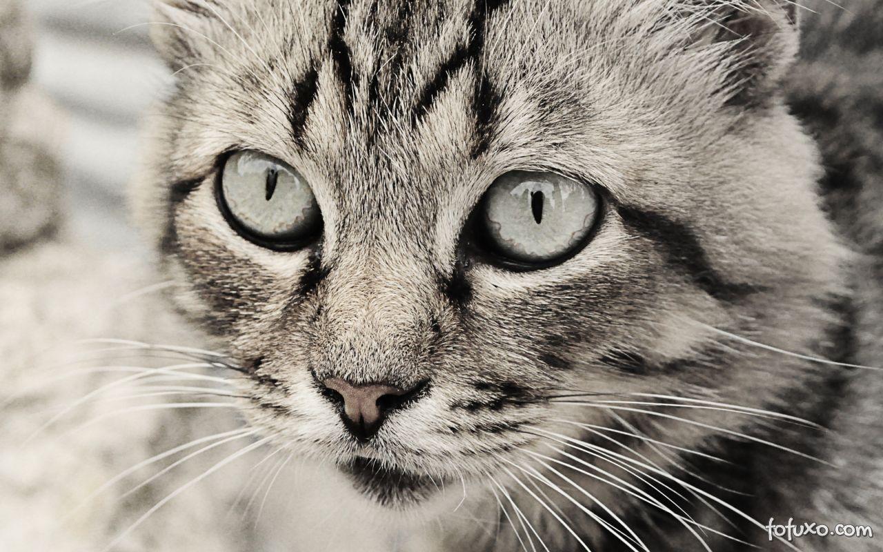 Gatos enxergam apenas determinadas cores.