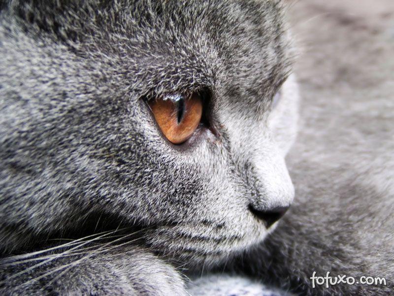 Como enxergam os gatos
