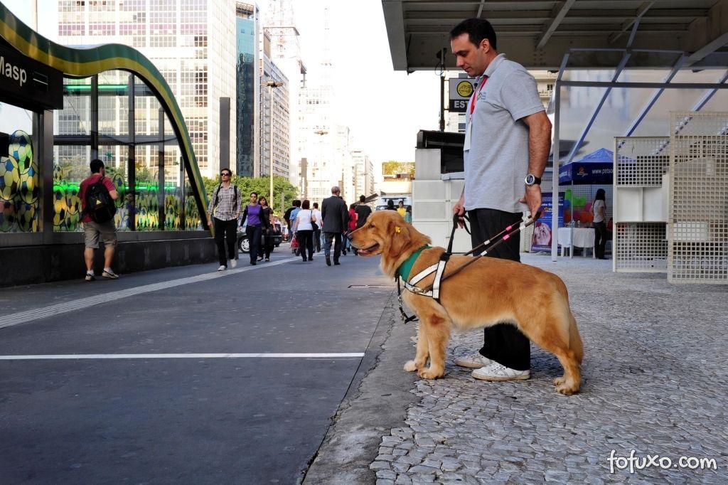 Treinamento de formação do cão-guia é árduo e caro.