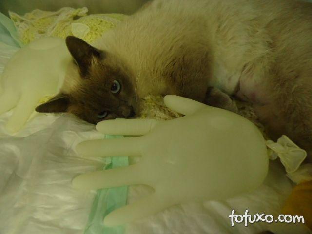 Filhotes de gatos se sentem bem com luvas aquecidas.
