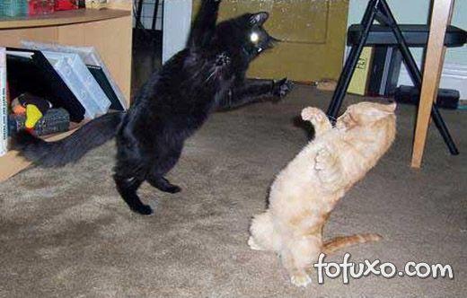 Gatos castrados ficam mais calmos.