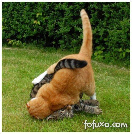 Gatos devem se acostumar com outros animais.