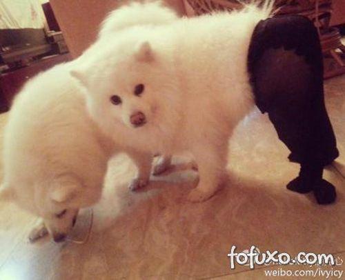 Cachorros com meia-calça