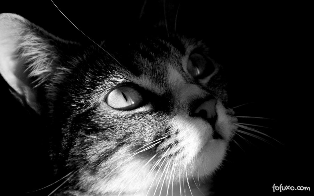 Gatos enxergam bem com pouca luminosidade.