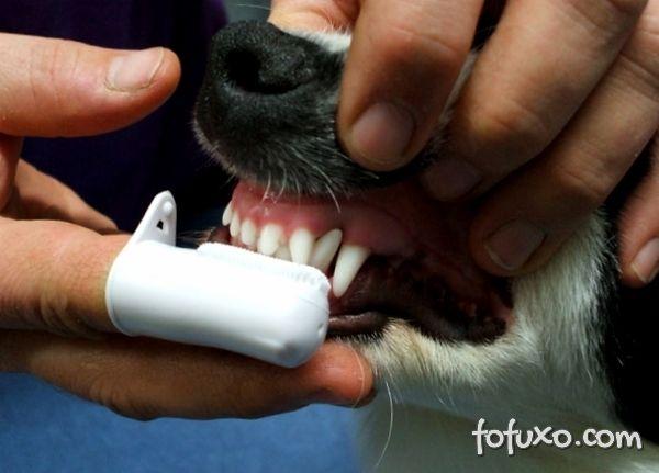 Massagear a gengiva dos cães é uma dica interessante.