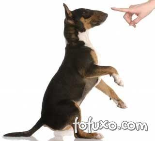 O cão deve aprender o significado do não.