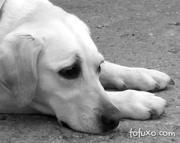 Diarreia canina