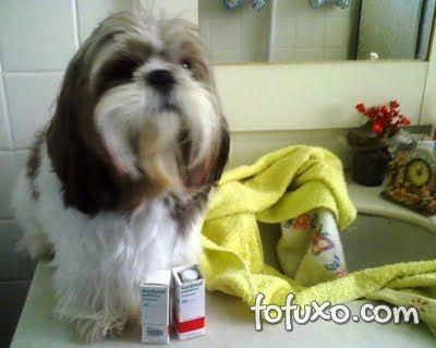 Cachorro com epilepsia precisa de medicamentos.
