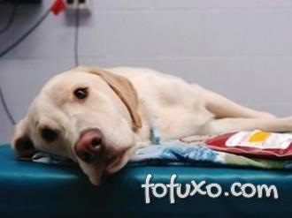 Cachorros podem doar sangue.