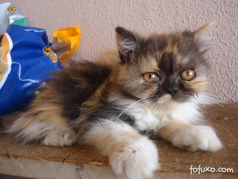 Cuidado com as vacinas dos gatos.