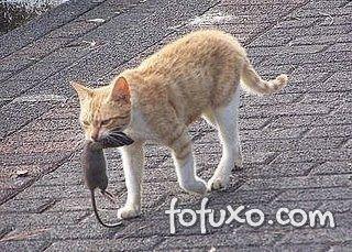 Gatos podem pegar o protozoário da Toxoplasmose de presas mortas.