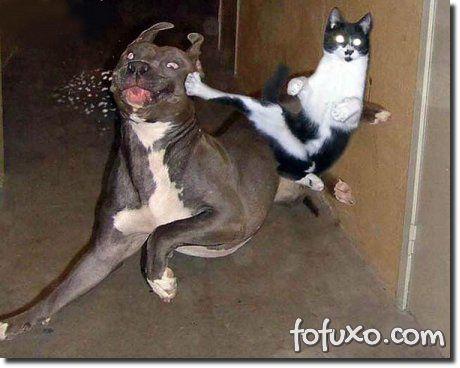 Cães e gatos podem ficar estressados por diversos motivos.
