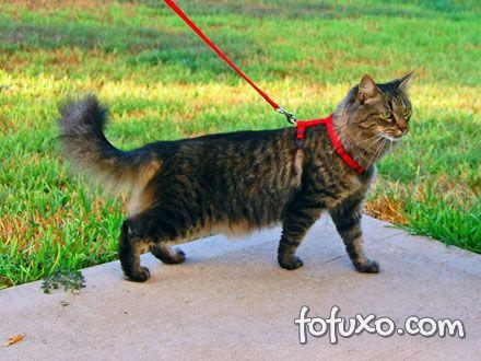 Coleiras devem ser utilizadas com cuidado em gatos.