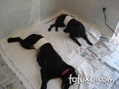 Cadelas castradas podem ter algumas doenças evitadas.