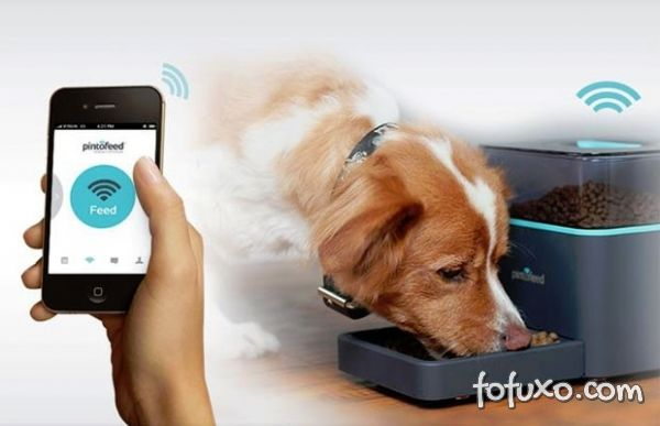 Aplicativo monitora alimentação dos cães.