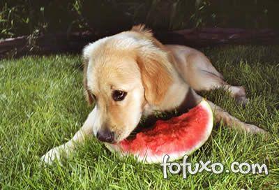 Cães devem ser acostumados aos poucos com alimentação natural.